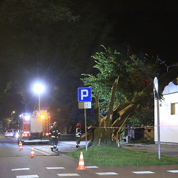 Wichura szaleje nad Świnoujściem. Wielkie drzewo spadło na stację Orlenu. Zobacz film!