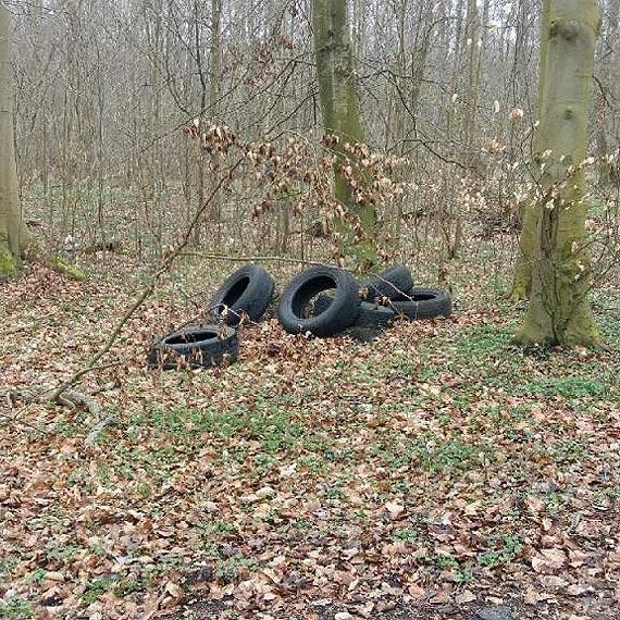Kolejne śmieci wyrzucone w lesie