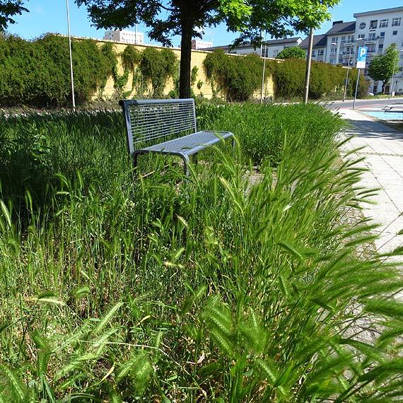 Mieszkanka: Miasto zarasta trawą!